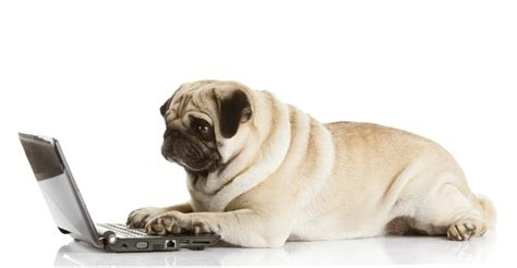 pug laptop how to communicate an emotion jellyvision
