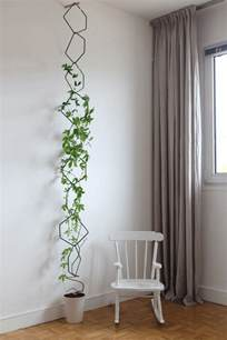 indoor climbing plants the best indoor vines and climbers that are easy to grow