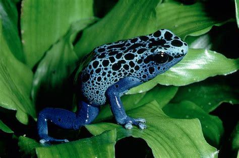 7 Most Poisonous Animals by Pin Tropische Regenwouden En Berggebieden Brengen Het