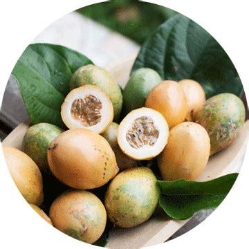 Pupuk Mkp Durian produsen distributor dan jual pupuk farmpion pt tirta