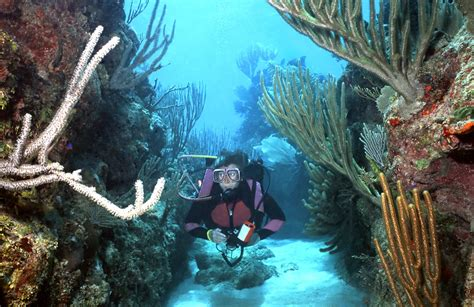 roatan dive your guide to roatan scuba diving trip sense