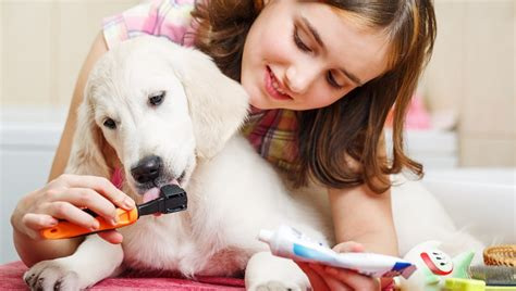 can you use human toothpaste on dogs proper dental care can help your live a longer healthier dogtime