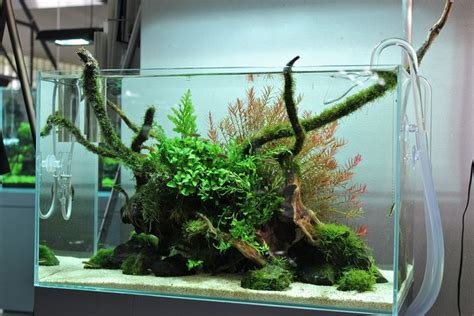 ada aquascape tank from the ada gallery via tanks