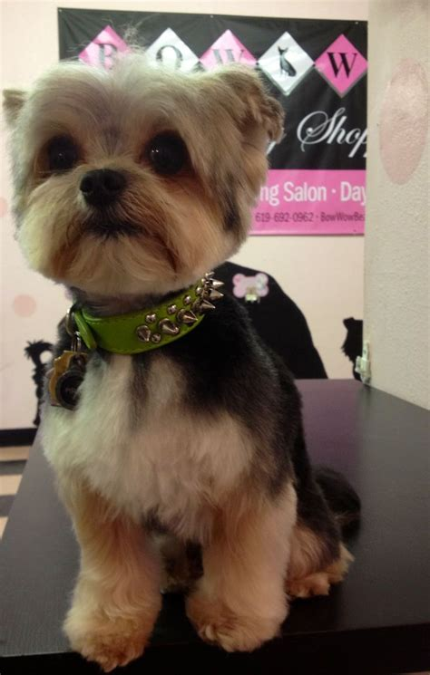 doodle bug baby boutique 36 best images about yorkie doodle dooooo on
