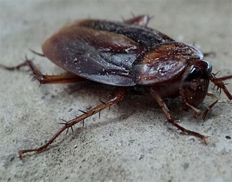 bed bugs utah bed bugs utah bedbug bed bugs pest control in provo utah
