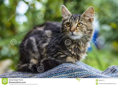 cat in backyard cat in the yard stock image image of cats background 45800717