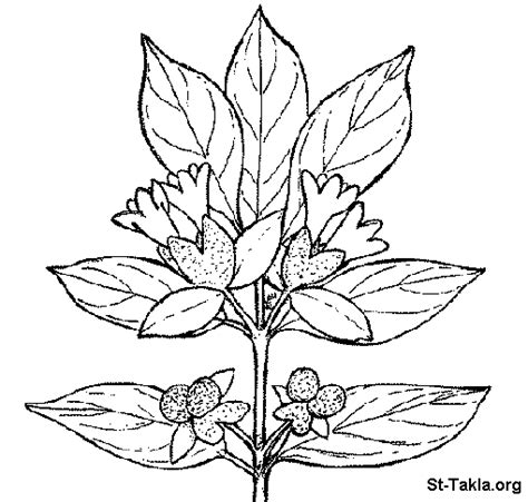 Free F Plant Coloring Pages Plants Coloring Page