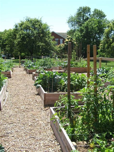 Community Garden Ideas Community Garden Ideas Www Imgkid The Image Kid Has It