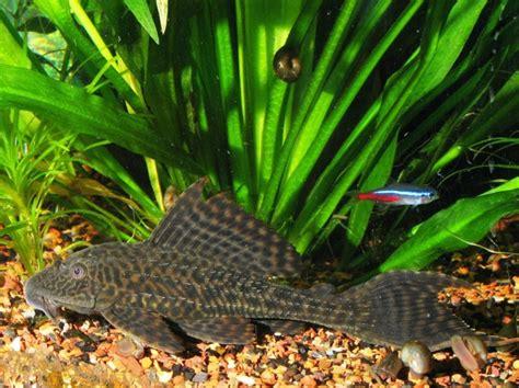 Poisson Exotique Pour Aquarium by Poisson Exotique D Eau Douce Liste Uz69 Jornalagora