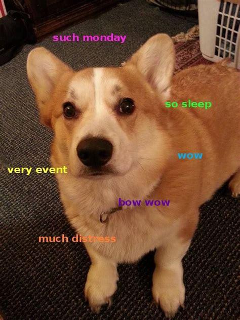 Shiba Inus Meme - 1000 images about shiba inu on pinterest doge doge