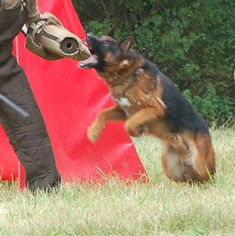 german shepherd puppy biting bite sleeve intermediate sleeve ps14jute 1 ps14j1073 intermediate