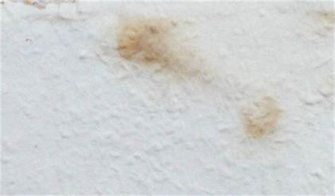 schimmelbefall wohnung wo kommen schimmelpilze in den wohnungen vor