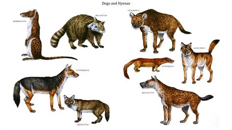 how to a to like other dogs dogs and hyenas mammal like dinosaurs