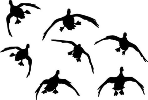 Racing Duck Sticker by Flying Duck Decals Www Pixshark Images Galleries