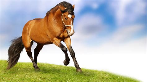 nice hourse running horse hd wallpapers