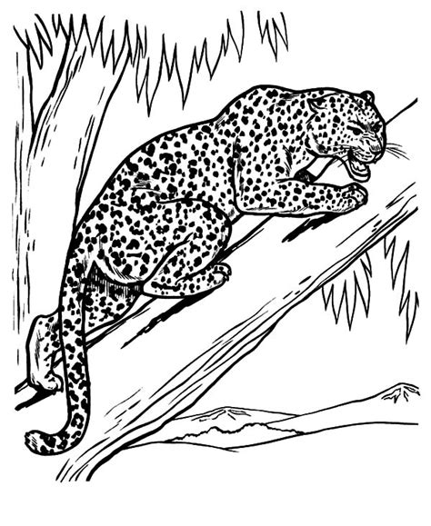 baby snow leopard coloring pages batch coloring