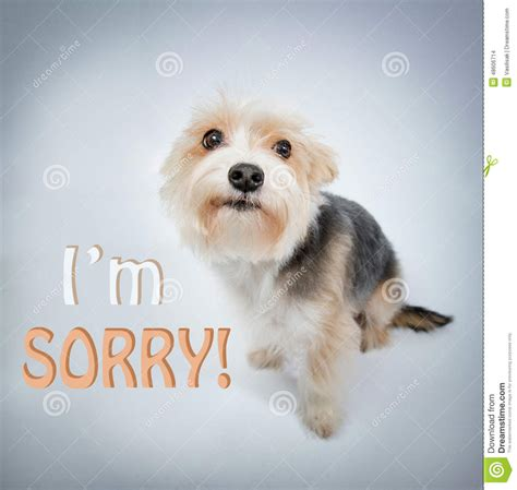 m dogs lovely beg pardon stock photo image of concept puppy