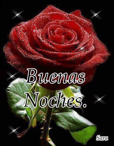 imagenes de rosas rojas de buenas noches m 225 s de 25 ideas incre 237 bles sobre foto para tapiz en