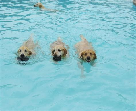 puppy lucky day care hosts epic pool pawty featured creature