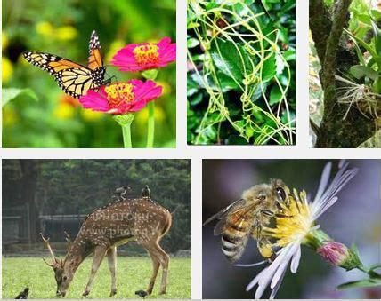 pengertian  macam macam contoh simbiosi mutualisme