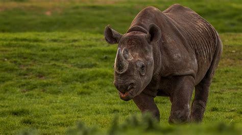 discount vouchers doncaster wildlife park yorkshire wildlife park places to go lets go with the