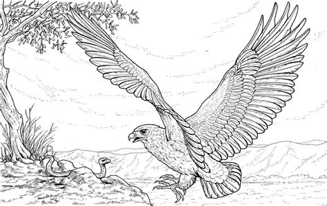 Eagle coloring pages to download and print for free Eagle Coloring Pages Free