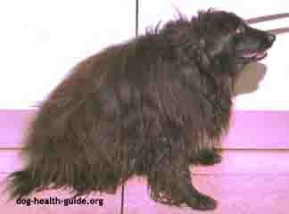 low thyroid in dogs thyroid problems in dogs care and treatment