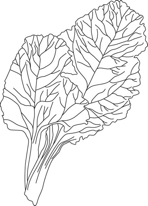 Coloring Pages Of Apple