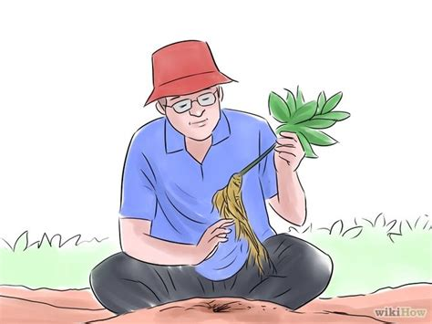 how to hunt for wild ginseng 11 steps with pictures how to hunt for wild ginseng 7 steps with pictures