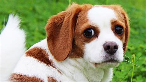 mutts dogs 7 crossbreed dogs that prove mutts are the cutest