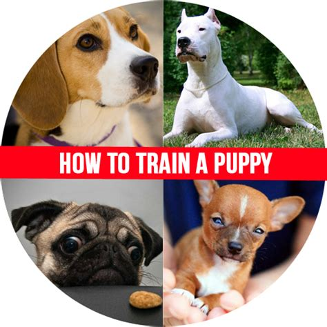 how to discipline puppy how to a puppy appstore for android