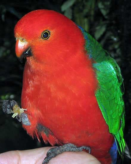 opinions on true parrot