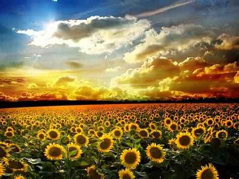 tempat wisata  pemandangan bunga terbaik  dunia