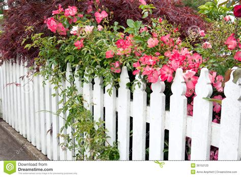 Arbor Trellis Plans Picket Fence With Roses Stock Photos Image 36152123