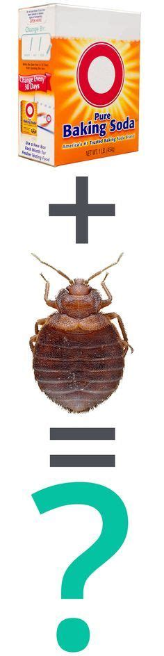 can lysol kill bed bugs best 25 killing bed bugs ideas on pinterest bed bug remedies what kills bed bugs