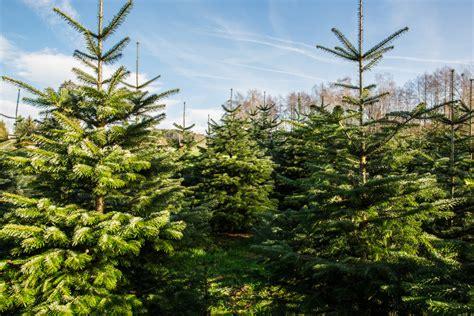 top 28 wieso weihnachtsbaum weihnachtsbaum selber
