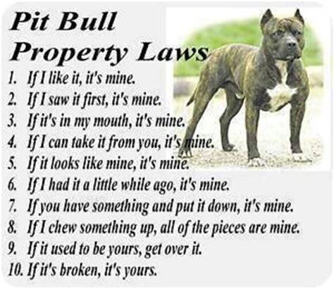 pit bull pets
