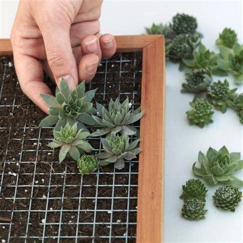 succulent living picture kit diy succulent wall planter