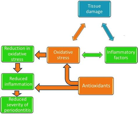 Nutrients Free Full Text The Role Of Nutrition In