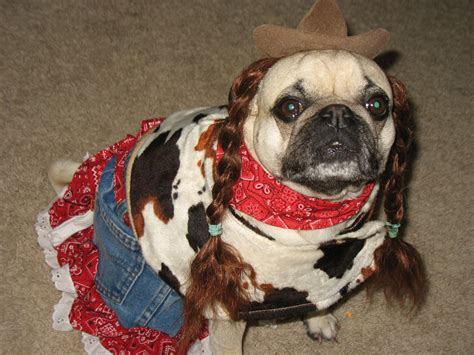 pug puppies in costumes pug costume pictures a pυggу hαℓℓσωєєи pug costume