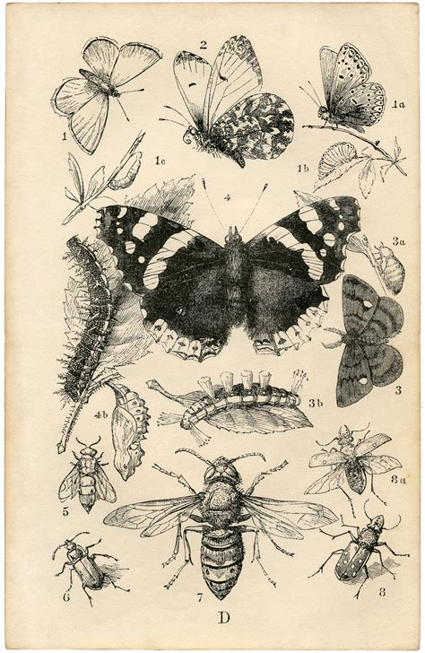 printable insect poster vintage prints www imgkid com the image kid has it