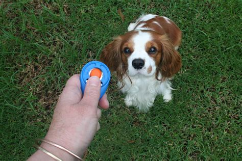 clicker puppy clicker your puppy the pet product guru