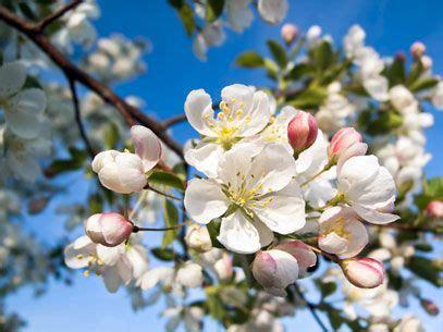 curare l ansia con i fiori di bach manda via l ansia con i fiori di bach