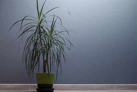 Plante Verte Intérieur by Les Plantes Vertes D Int 233 Rieur Le Nettoyage Oleomac