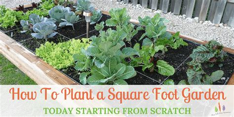 Starting A Garden From Scratch by 100 Starting A Vegetable Garden From Scratch How To