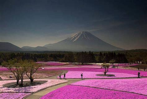 most beautiful places in the us mount fuji japan 20 most mount fuji flower festival japan most beautiful places