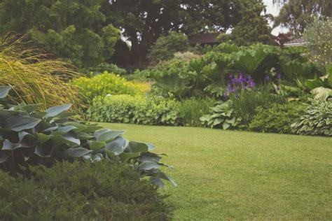 stock photo  garden