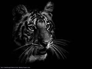 Black And White Photographer Ed Hetherington Black And White Animal Portraits