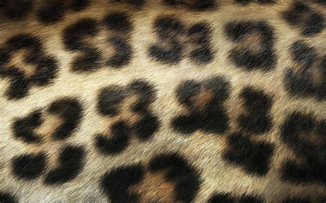 leopard print wallpaper for bedroom leopard print wallpaper for bedroom hd desktop
