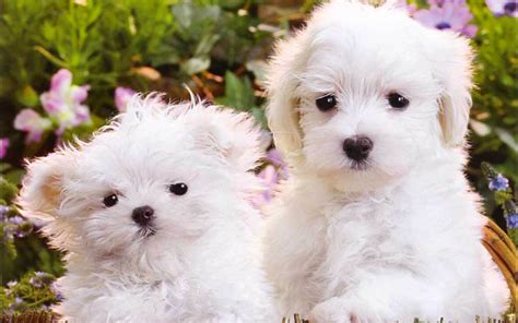cute dogs and puppies wallpapers wallpaper cave free cute puppies wallpapers wallpaper cave download